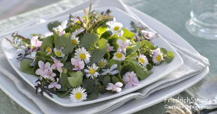 In voller Blüte: Blumen kommen jetzt auf Tisch und Teller!