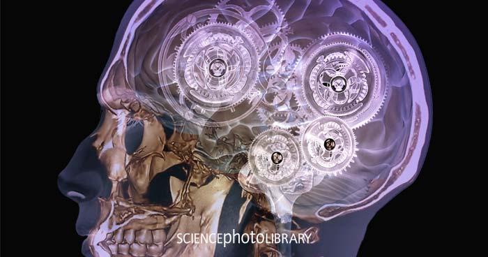 Beeindruckend in Wort und Bild: Das menschliche Gehirn