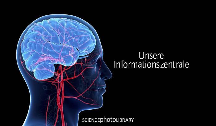 Die Informationszentrale unseres Körpers
