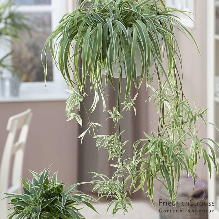 Frischluft für eure Räume – Grünpflanzen als Luftverbesserer